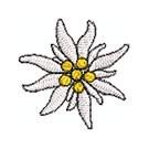 Edelweiss blüte 35 mm