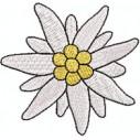 Edelweiss blüte 65 mm