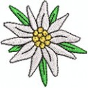 Edelweiss blüte extra 2