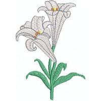 Osterlilie